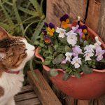 お花とねこ