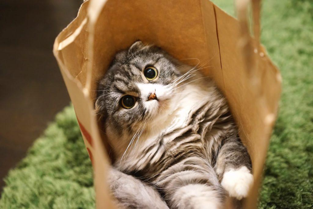 袋の中のねこ