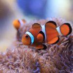 熱帯魚 海