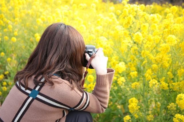 菜の花 撮影